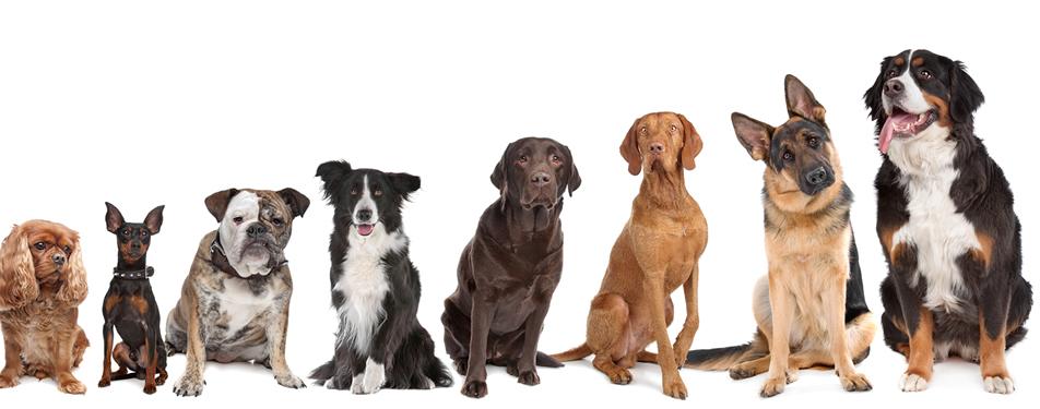 Peak Dogs